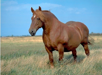 Caballo raza Suffolk Punch
