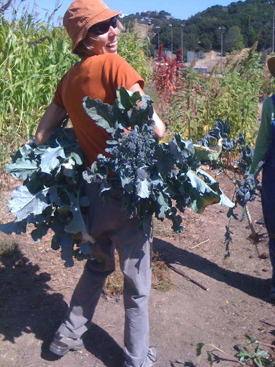 Delia harvesting Broccoli