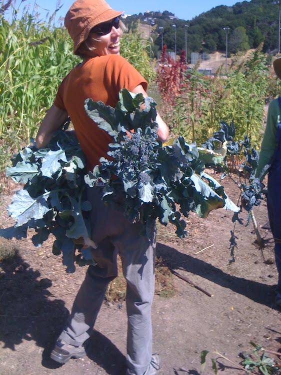 Delia harvesting Broccoli