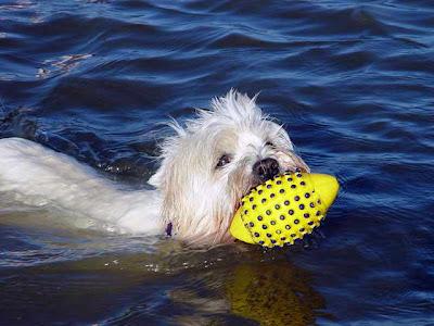 Ferienwohnungen Ufer St. Peter-Ording, preiswerte Ferienwohnungen fuer den Urlaub mit Hund