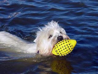 Urlaub mit Hund an der Nordsee, das Schwimmen in der Nordsee macht Spass, auch für Ihren Hund und ist soooo gesund