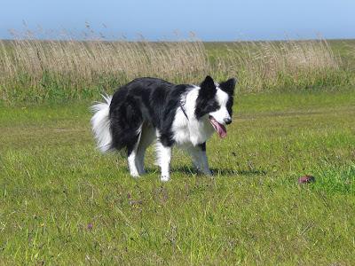 Urlaub mit Hund in St. Peter-Ording
