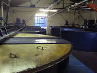 washbacks at pulteney distillery
