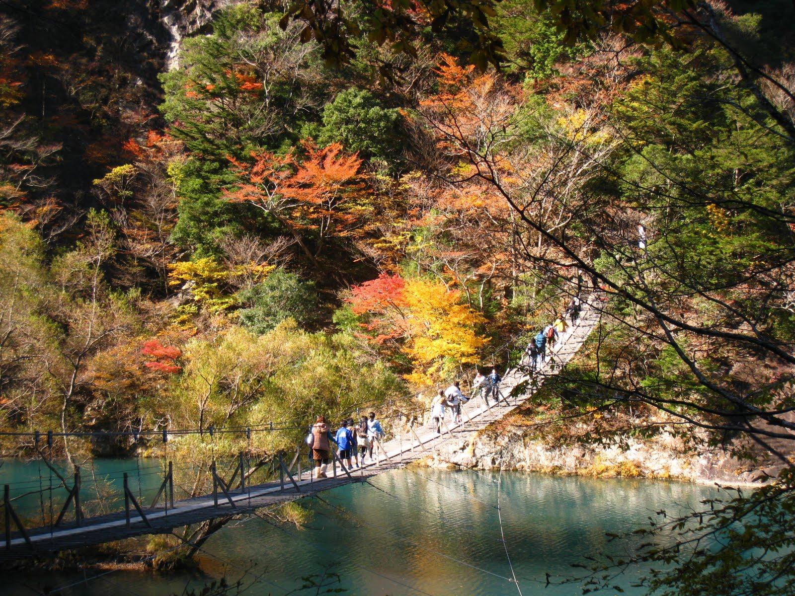 夢の吊り橋 絶景 紅葉