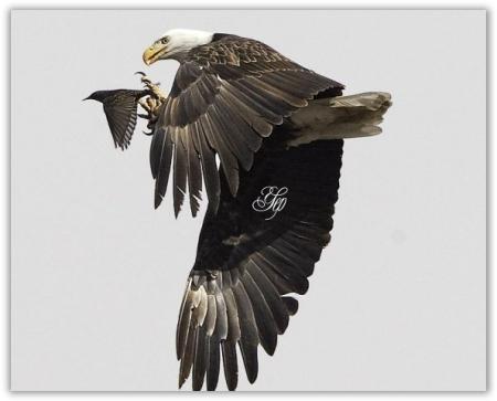 Kumpulan Gambar Burung Kenari Merpati Murai Cendrawasih Elang Dll