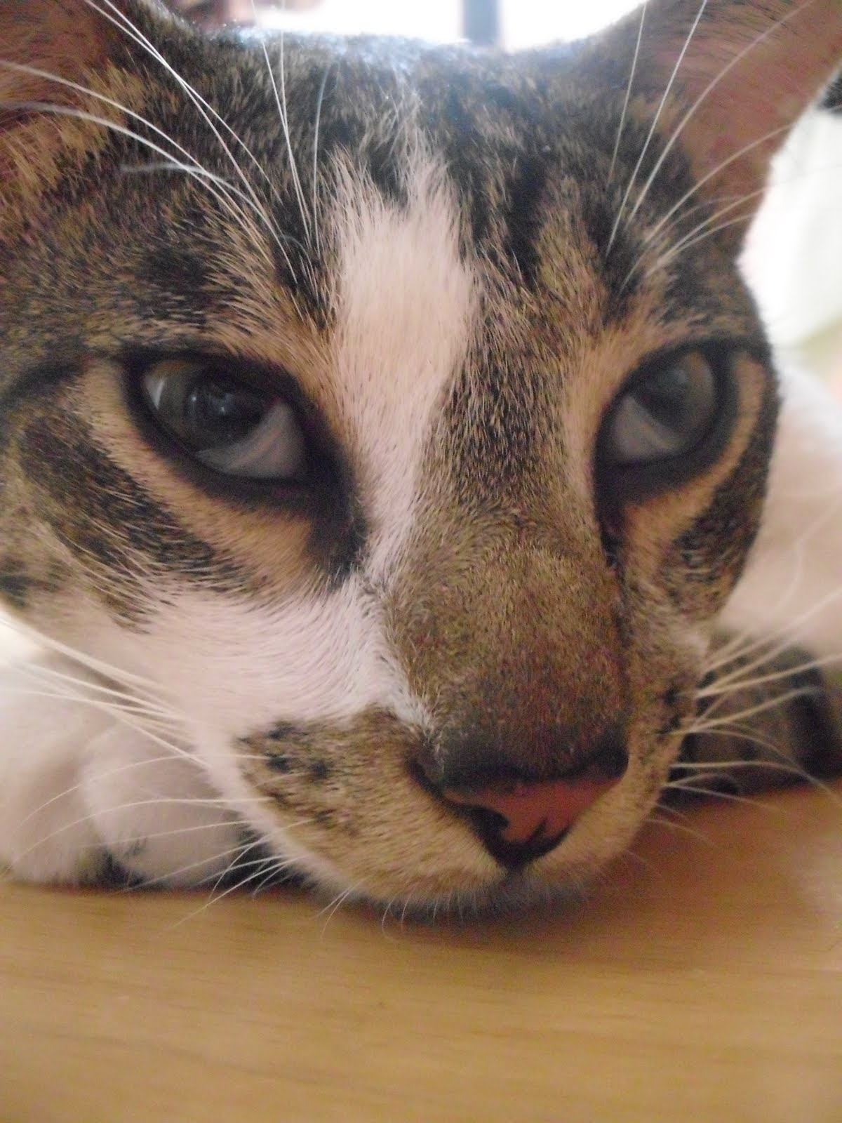 Чем лечить кошке глаза в домашних условиях фото