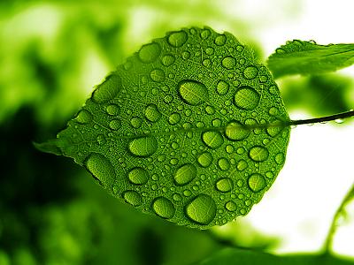 Green Leaf Rain Drops wallpaper, Health-Care update