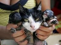 anjing anak kucing