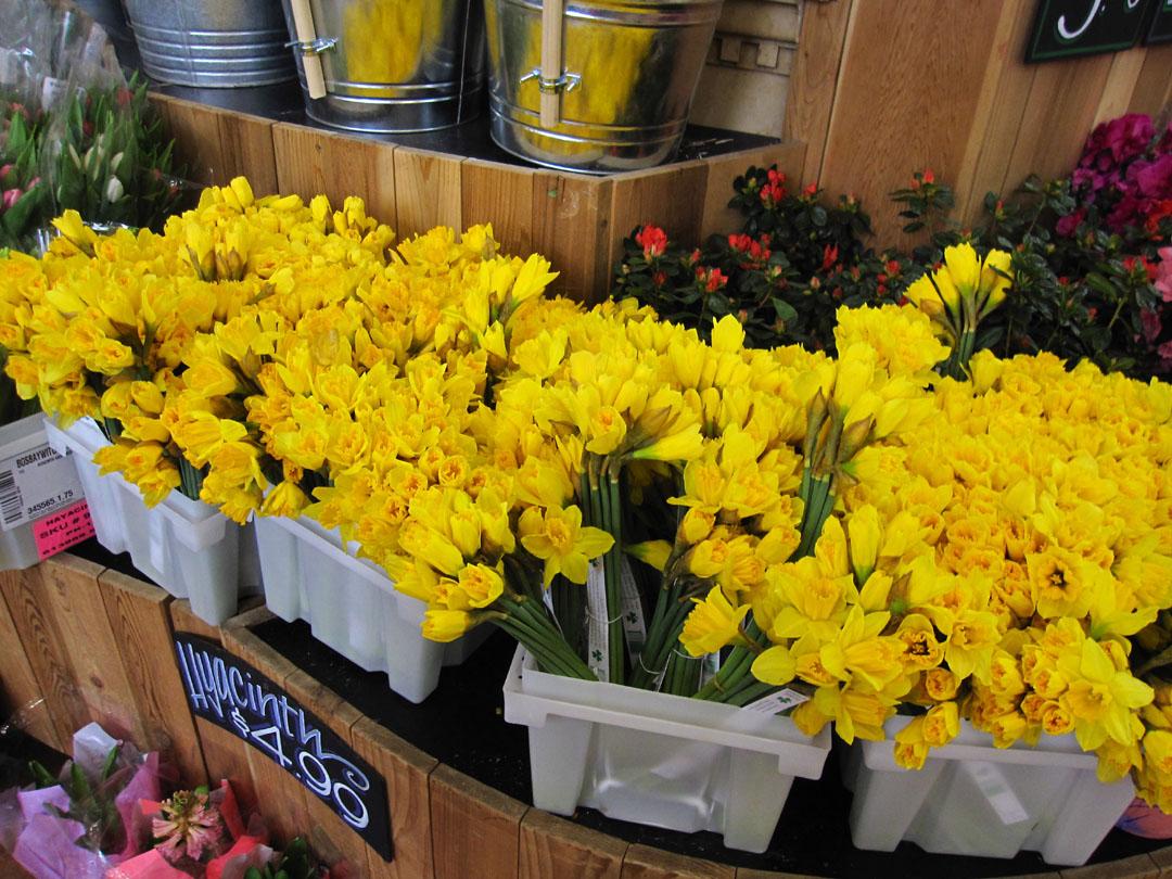 66 Square Feet Plus Trader Joe s flowers