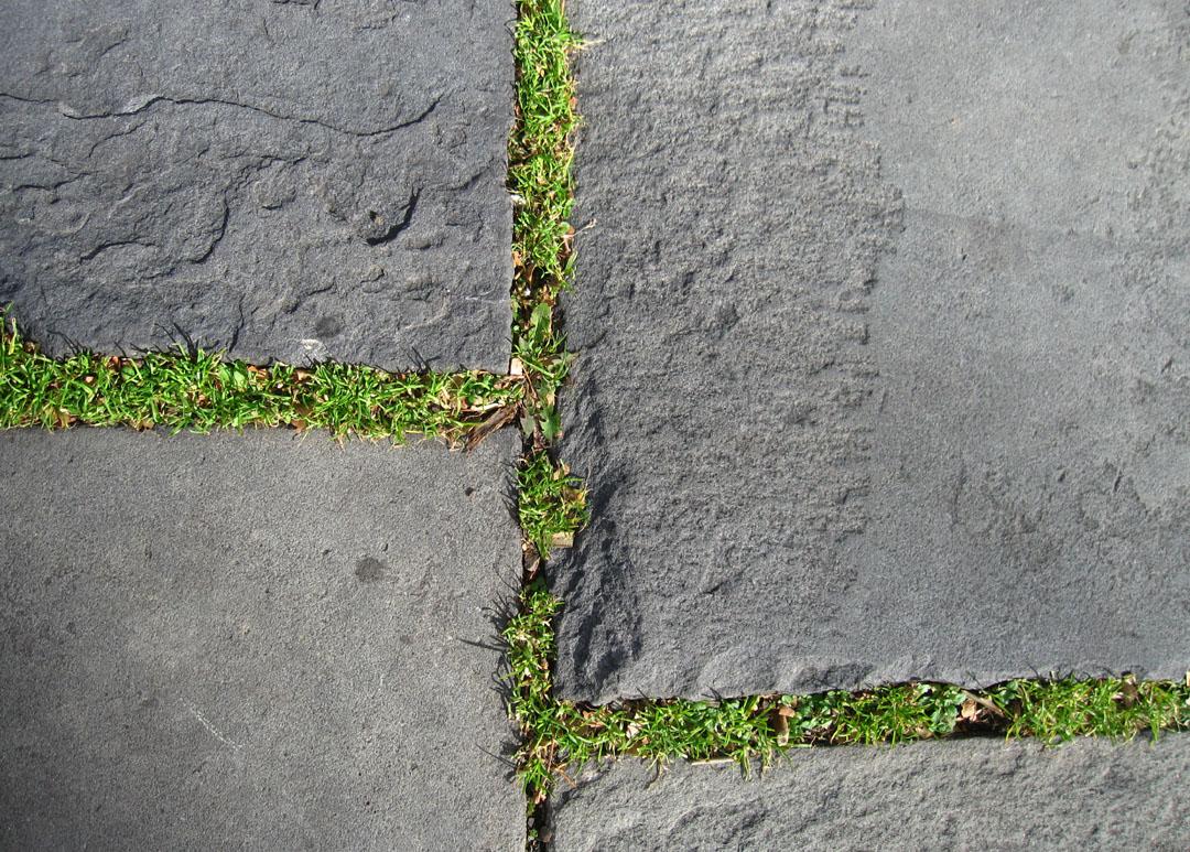 http://2.bp.blogspot.com/_PVsgqPyZ-W8/TOnzIYkv28I/AAAAAAAAkBM/xorqOHnG0GA/s1600/god+bless+the+grass.jpg