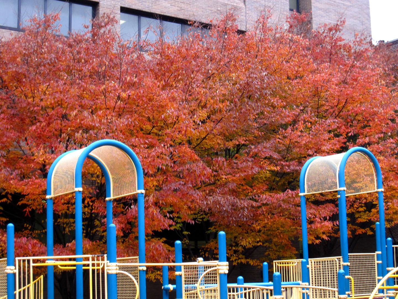 http://2.bp.blogspot.com/_PVsgqPyZ-W8/TOnzNmSKLOI/AAAAAAAAkBY/Hko5ocnBKgk/s1600/Zelkova+fall+color.jpg