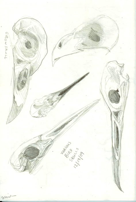 [sketchbook_bird_skulls.jpeg]