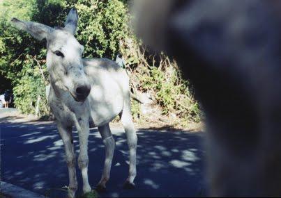 http://2.bp.blogspot.com/_PWIe_RibHgQ/TBHaM9BT-WI/AAAAAAAAAac/x32GC7cz6A0/s1600/donkey073sm.jpg