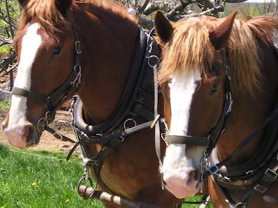 Meeting Place Organic Farm Horses