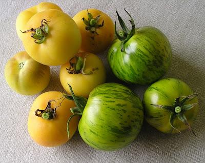 Garden Peach and Green Zebra Tomatoes