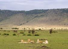 North Est Africa