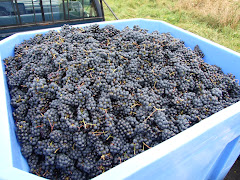 Bennet Hill Wine Grapes