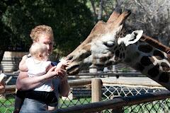 A giraffe by the nose!