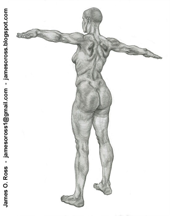 James O. Ross - Game Artist: Additional Anatomy Drawings (Part 1)