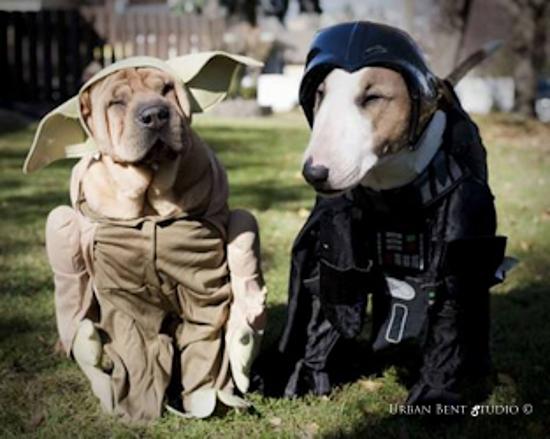 dog Star Wars Halloween costume
