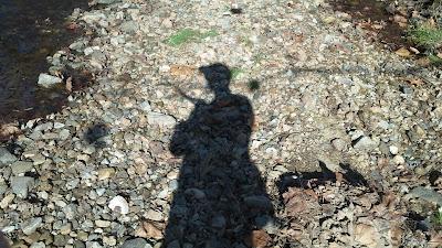 shadowy angler