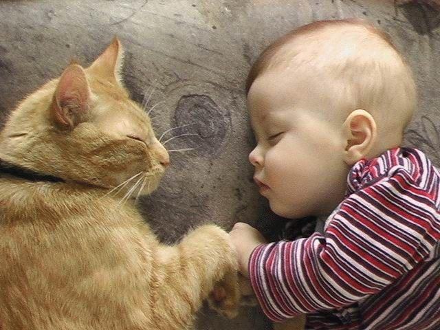 طفل و قطة cat and baby sleeping.jpg