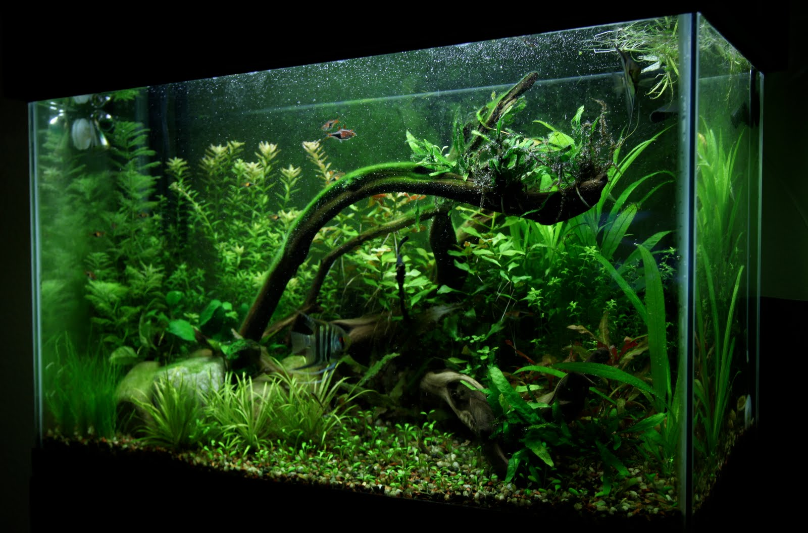 Aquarium plants 20 gallon the above is a couple of 20 for Planted tank fish