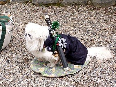 Ein... äh... Samurai-Hund? =)