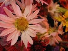 La Feria De Las Flores