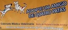 Canil/Gatil do Seixal