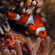 informacion sobre peces