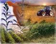 Agricola y Jardineria