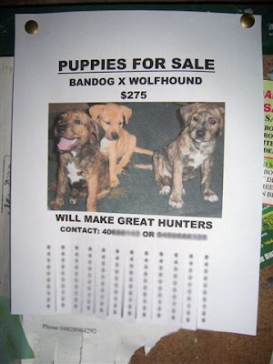 puppies and dogs for sale. Puppies And Dogs For Sale.
