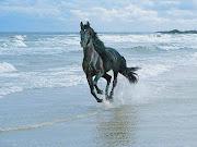 poze cai negri poze cu cai. Pentru a vedea si restul pozelor cu cai .
