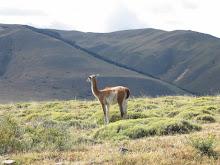 Animales patagónicos