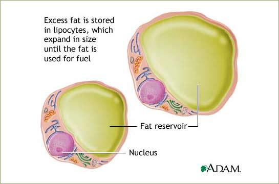 Zumba fat loss program