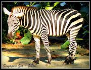 Singapore Zoo animals