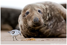 The bird and The seal