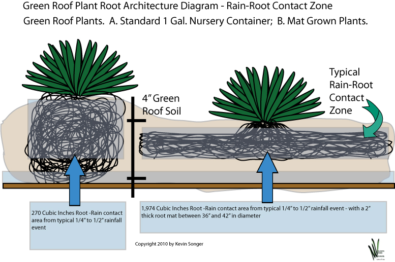 Kevin Songer Green Roof Plant Root Architecture Photos