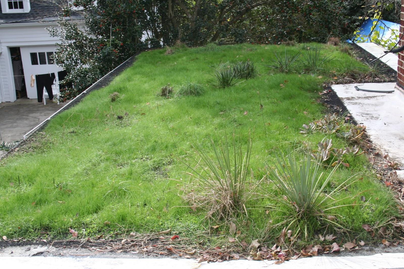 Kevin Songer Lightweight Nature Irrigated Extensive Green