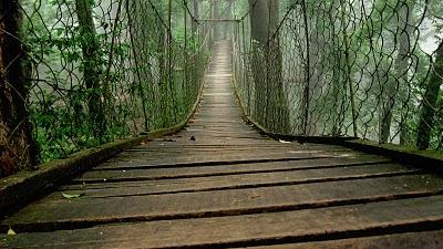 Canopy Walk, Neora Valley, Loley Gaon