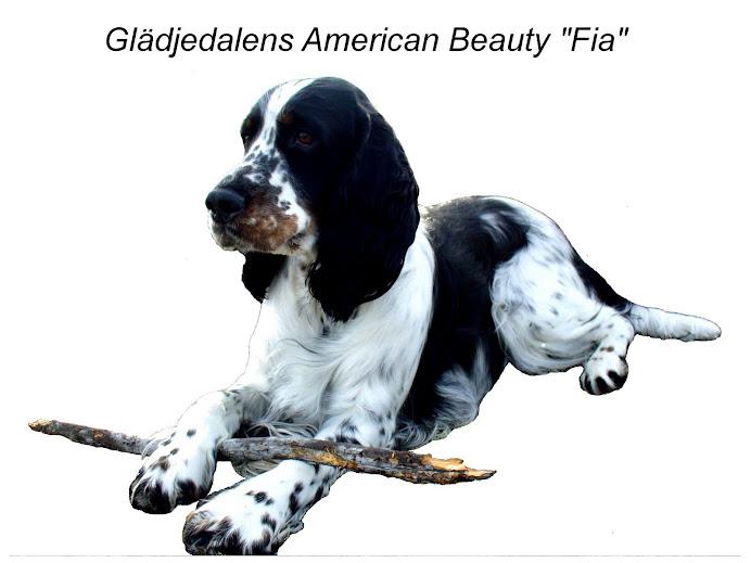 """Glädjedalens American Beauty """"Fia"""""""