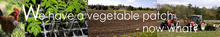 We have a vegetable patch - now what?