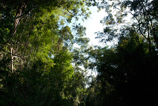 Cambodia - Trek in Ratanakiri, forest