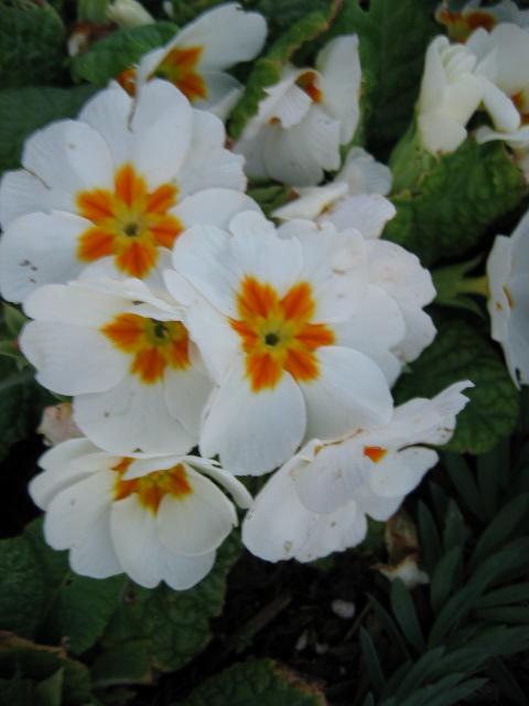 [++Spring+1]