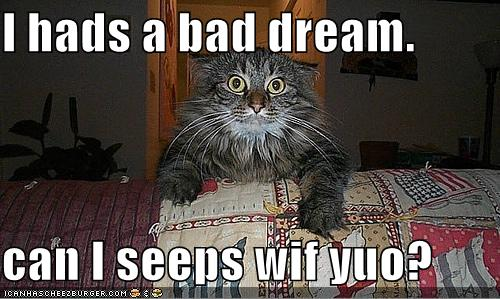 funny cat quotes. funny cat quotes.