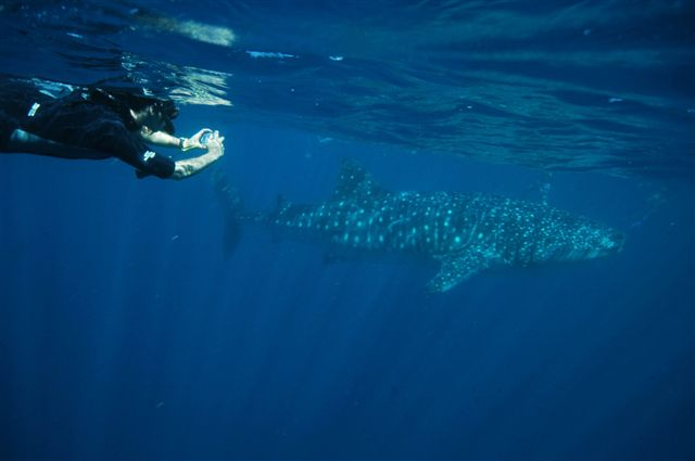 The Whale Shark Photo-Identification Project