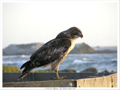 seahawk.jpg