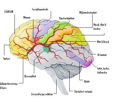 [alex+hjärna.JPG]
