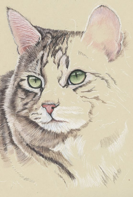 fur in the paint new surface uart premium sanded pastel paper